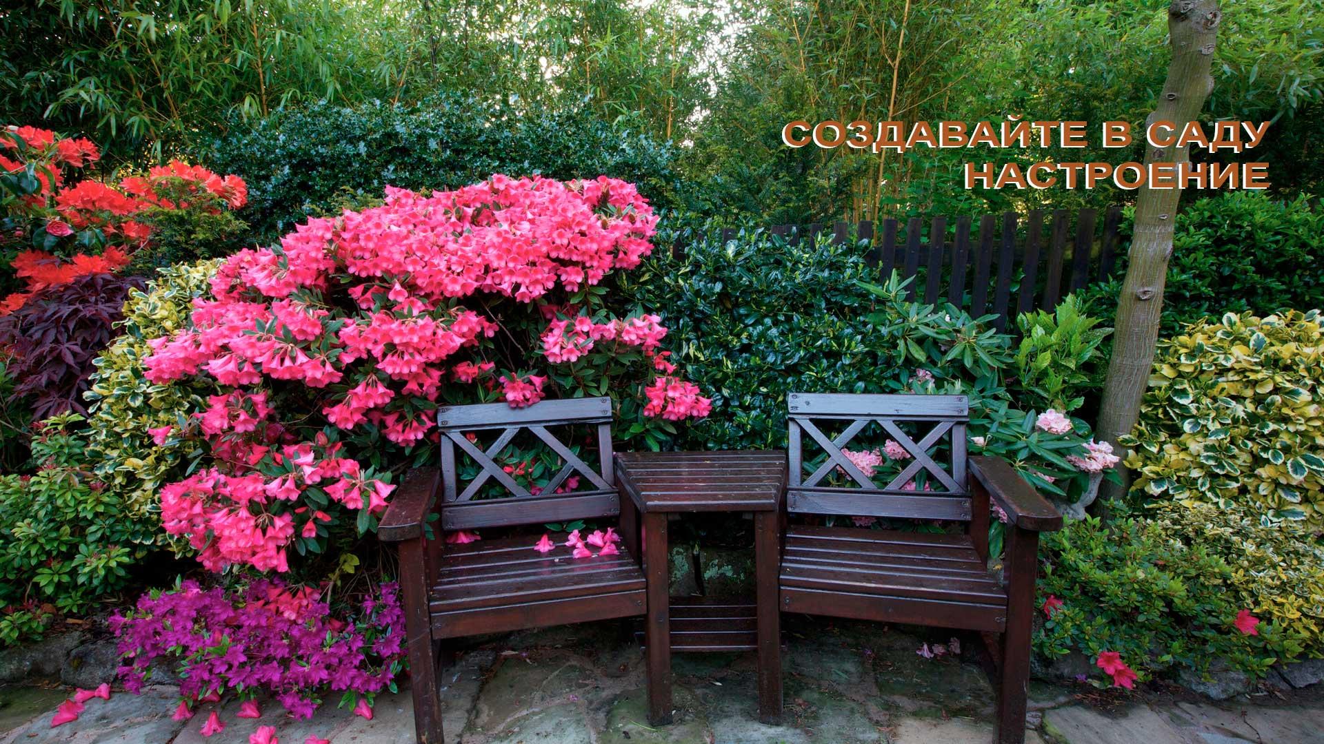 Саженцы декоративных кустарников