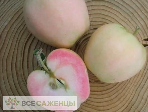 Яблоня Розовый Жемчуг (Пинк Перл — красномясая)